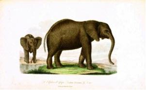 Vintage artwork of two elephants standing in a landscape.